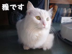 2月22日は「猫の日」らしいので、もう1人の家族をば(笑)